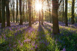 beech-wood-trees